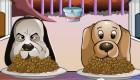 Competición de perros