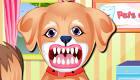 Un perrito en el dentista