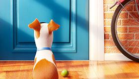 Objetos ocultos en la vida secreta de las mascotas