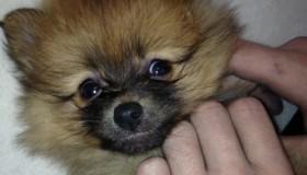 Zayn y Perrie adoptan una mascota