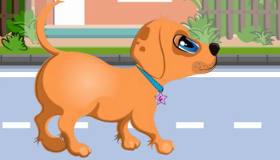 Laika en el veterinario
